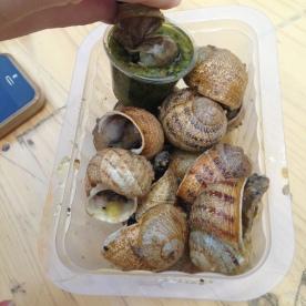 snails!